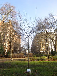 Russell Square in London