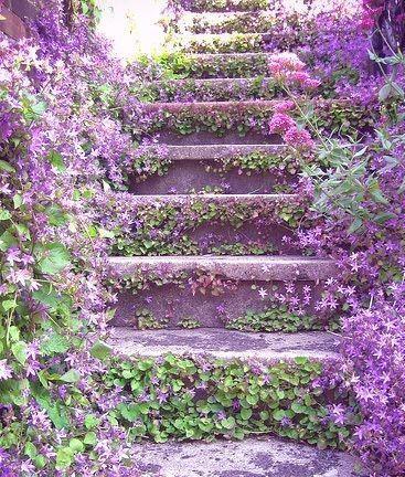 purple-campanula